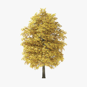 3D model autumn rock elm tree
