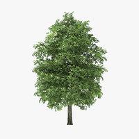 3D rock elm tree