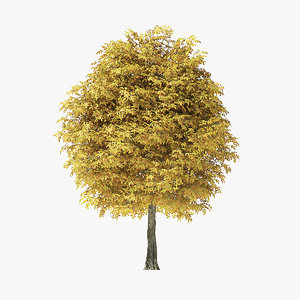3D autumn rock elm tree model