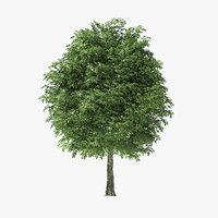 3D model rock elm tree