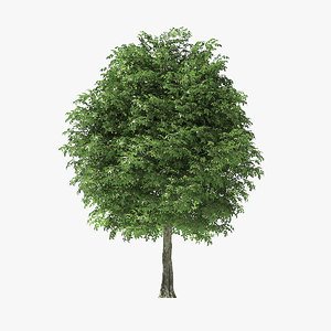 3D model rock elm tree