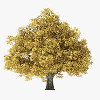 autumn rock elm tree 3D model