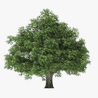 3D rock elm tree model