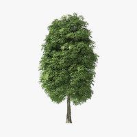 3D tree rock elm