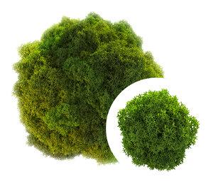 stabilized moss model
