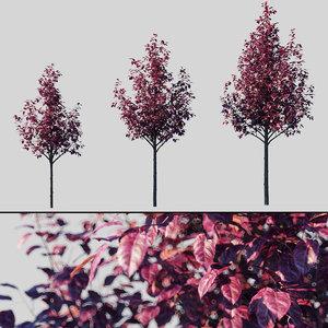 3D tree cerasifera