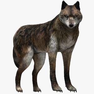 wolf beast 3D