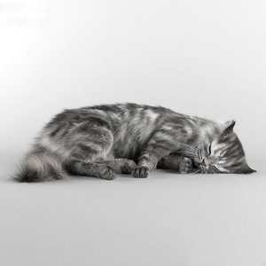 cat animal model