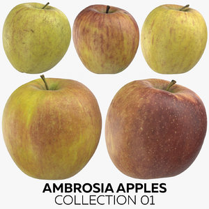 ambrosia apples 01 model