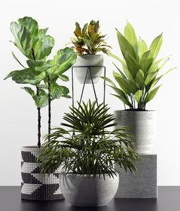 plants indoor 3D model