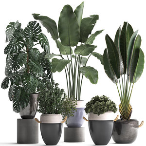 3D houseplants exotic plants model