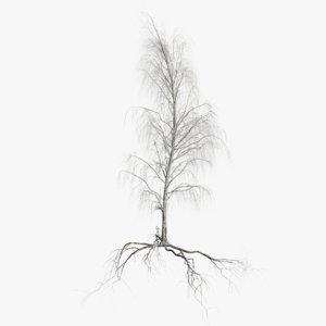 birch dry 4 tree 3D model