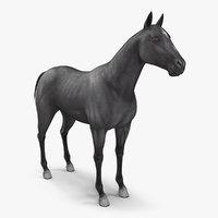 3D horse black