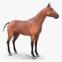 3D bay horse animal model