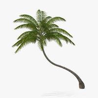 tropical palm tree plant 3D