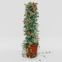 3D thunbergia alata ivy pot