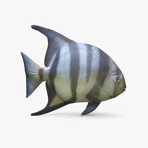 3D spadefish pbr
