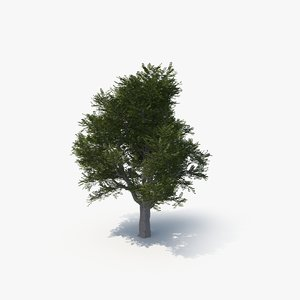 3D ash tree model