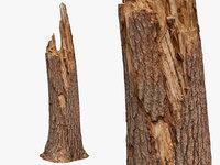 Broken Tree Trunk - 8K Scan