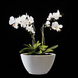 3D flowers orchid set 02