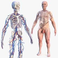 male skeleton cardiovascular skin 3D model