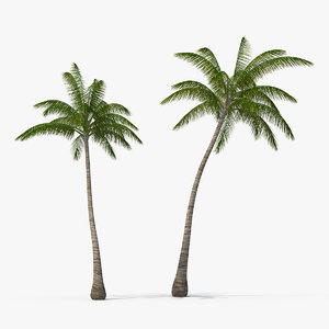 3D tall coconut palm trees plants