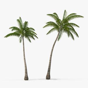 3D tall coconut palm trees plants