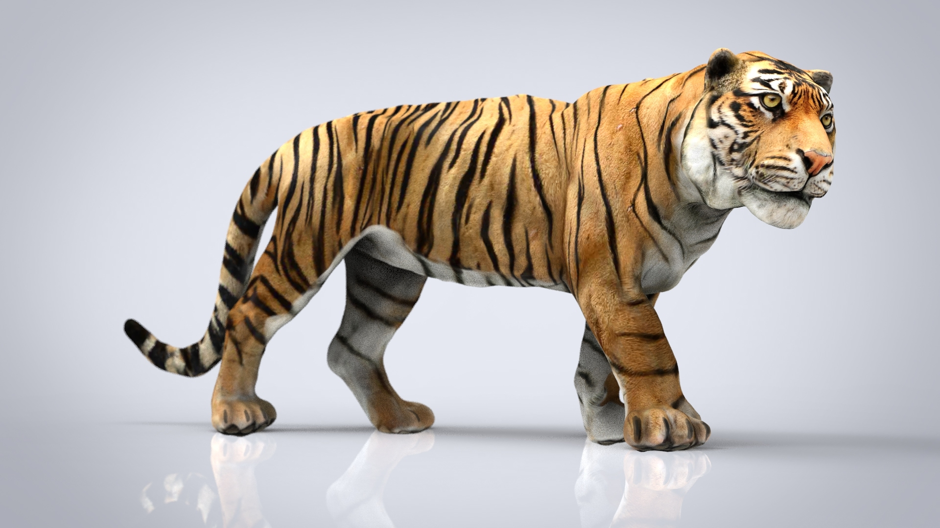 tiger animal nature 3D model