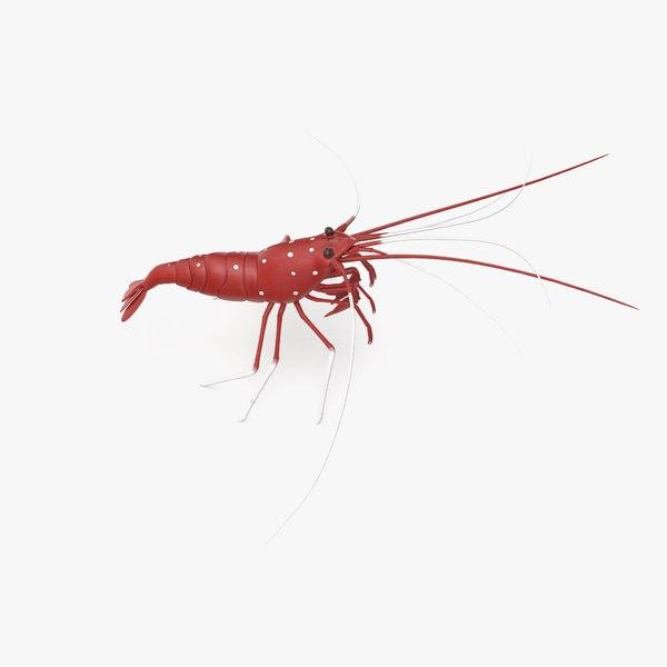 blood shrimp 3D model