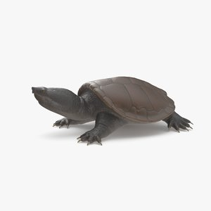 3D common snapping turtle model