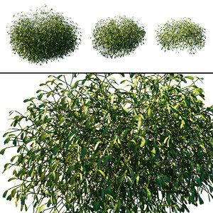 3D plant album
