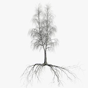 birch dry 5 tree 3D