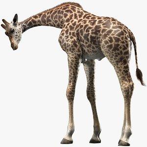 realistic giraffe rigged animations 3D model