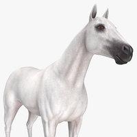 3D model white horse animal