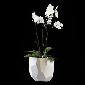 orchid flower model