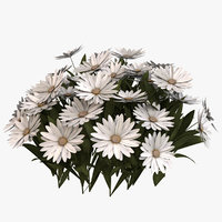 3D daisy flowers model