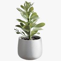 3D realistic potted faux succulent model