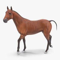 3D bay horse racing rigged