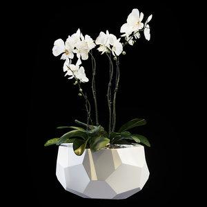 3D flowers orchid set 04