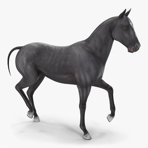 3D horse black rigged