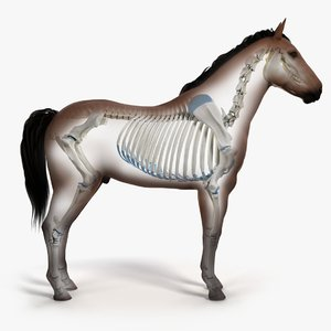skin horse sceleton skeleton animation 3D