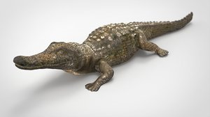 3D reptile crocodile alligator