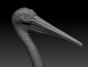 3D model pelican hi