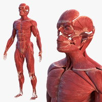 Anatomy 3d models