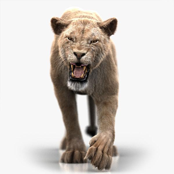 lioness 3 fur animation 3D model