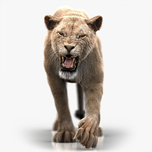 lioness 3 fur animation 3D model