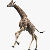 realistic giraffe animations 2 3D model