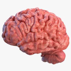 3D human brain left hemisphere