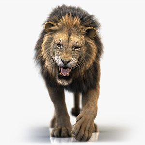 3D lion fur animation