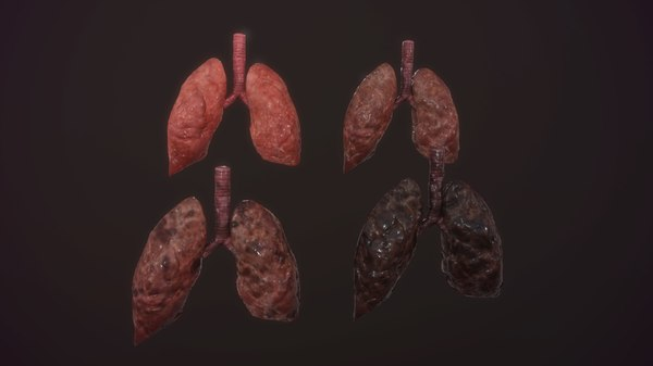 3D model animation medical